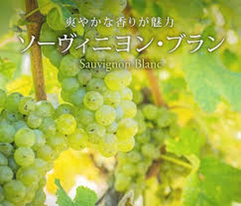 ソーヴィニヨン・ブランのブドウ