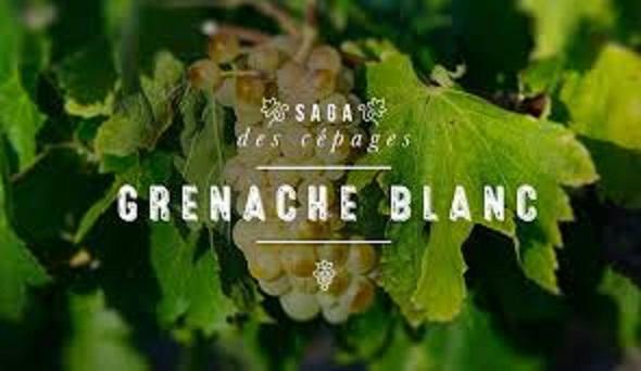 グルナッシュ・ブランのブドウ