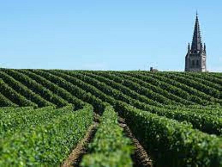 ボルドーの広大なワイン畑