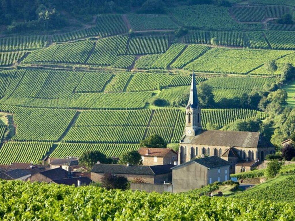 ブルゴーニュの斜面に広がるワイン畑
