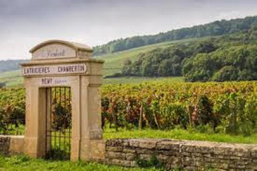 ブルゴーニュの小規模なワイン畑の外観
