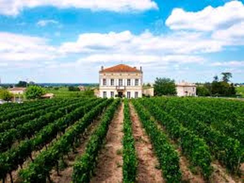 シャトーが有する広大なワイン畑