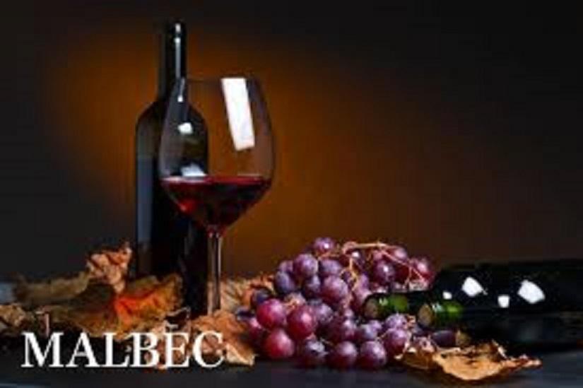 マルベックのブドウ